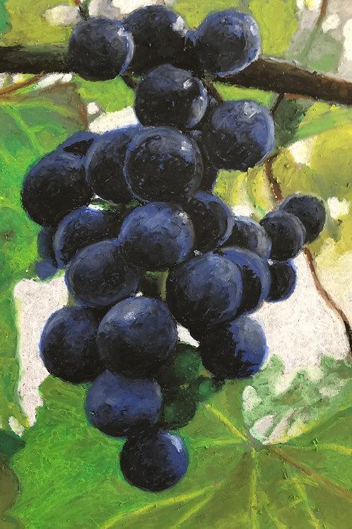 Wine grapes - Lael Salaets