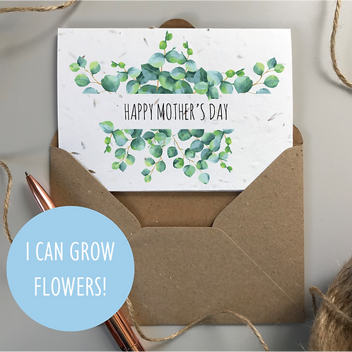 Mother's Day Eucalyptus - Seeded