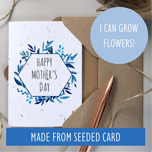 Mother's Day Blue Foliage - Seeded
