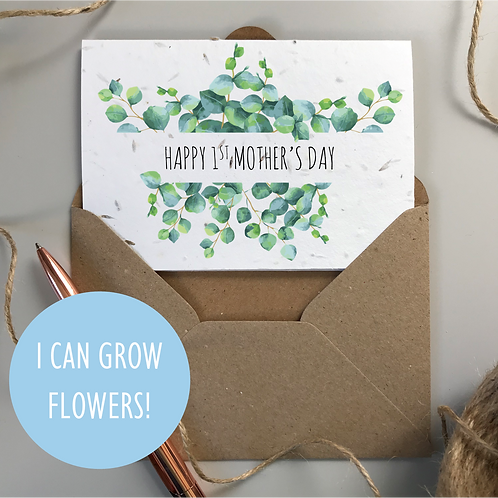 First Mother's Day Eucalyptus - Seeded