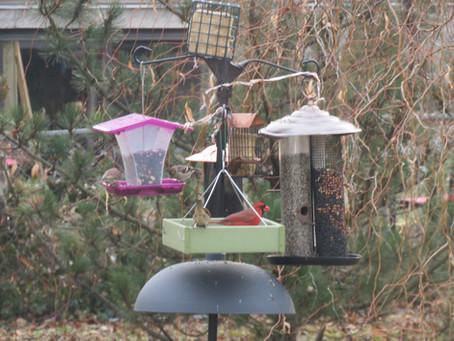 The Official 2020 Backyard Bird Blog!