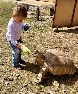 kid feeding tortoise.JPG