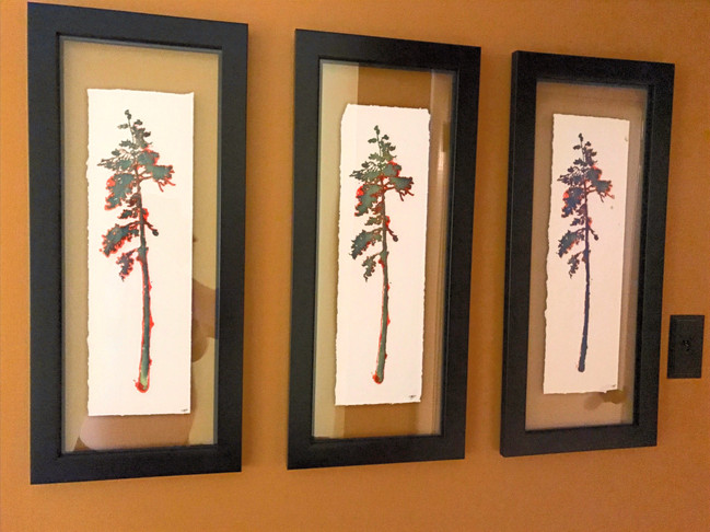 Tree Prints (in the home)