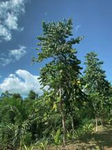 tree-plantation-2.jpg