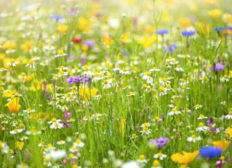 Pollinator Pathway!