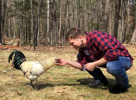 Chickens of Woodstock