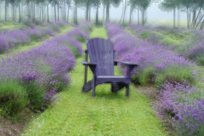 Lavender chair