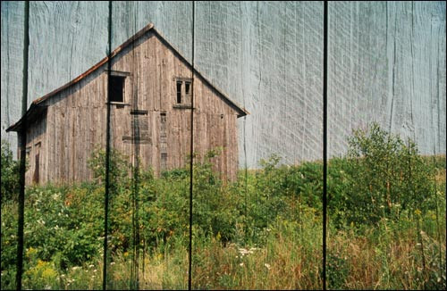 In the Grain