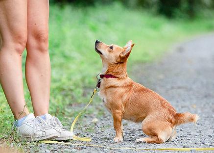 Hund im Training