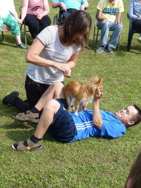 Therapiehund Capper