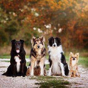Therapiehunde