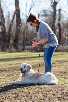 Lernen mit Hund