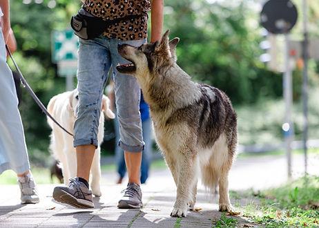 Hundeschule in Karlsruhe unterwegs