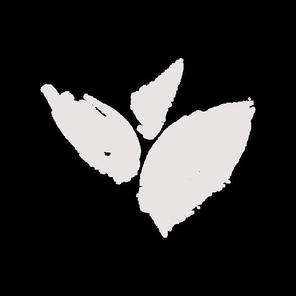 sassafra leaf