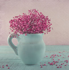 bigstock-Pink-Baby-s-Breath-Flowers-In--