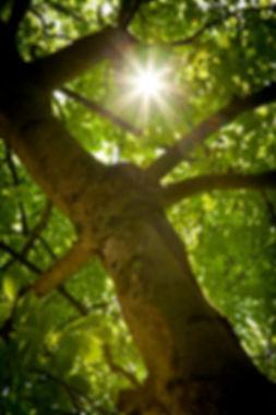 Zipsfotografie2013006153183153.JPG