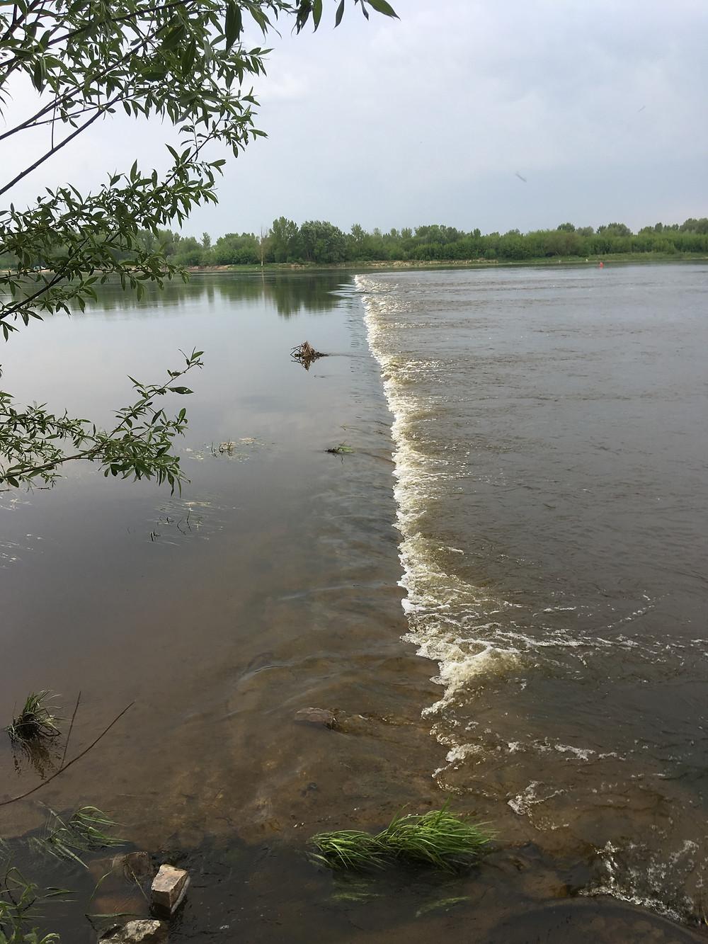 Główka k. Liszyna na rzece Wiśle przy średnim stanie wody.
