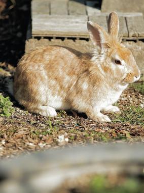 ヤギ・ウサギ広場