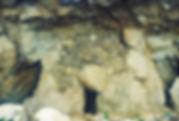 resti di ippopotamo ad acquedolci