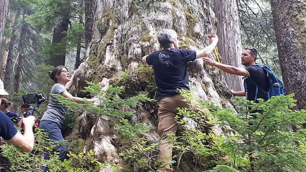 4-Measuring Cedar.jpg