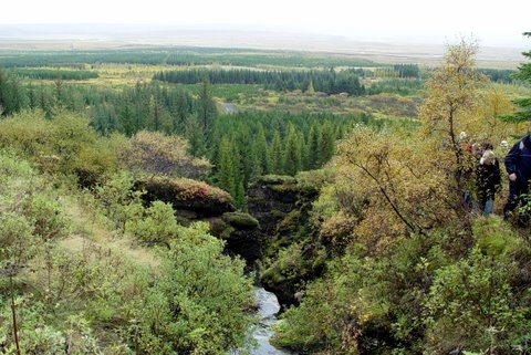 Haukadalur forest
