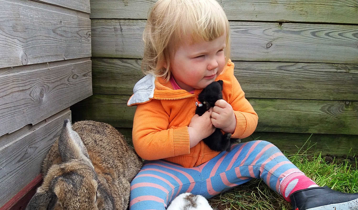 Bunnies with mom