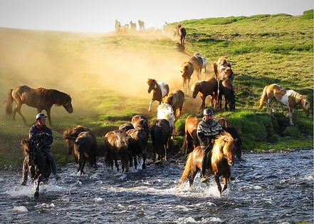 private riding tour, horse riding, icelandic horses, Kjölur, perfect ride, family ride