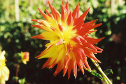 SA FLOWERS 3 -R1-012-4A.jpg