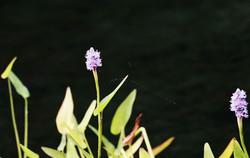 N CAROLINA FLOWERS 4-R1-000-_48.jpg