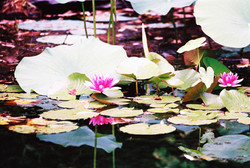 N CAROLINA FLOWERS 10-R1-000-_72.jpg