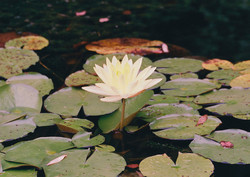 N CAROLINA FLOWERS 9-R1-000-_71.jpg