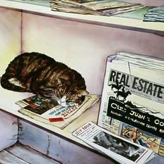 Newpaper Cat