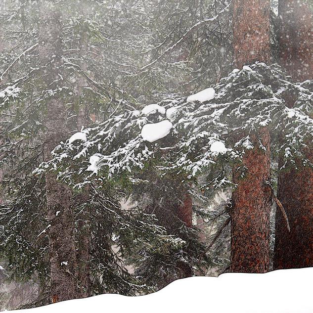 quiet-snow_1.jpg