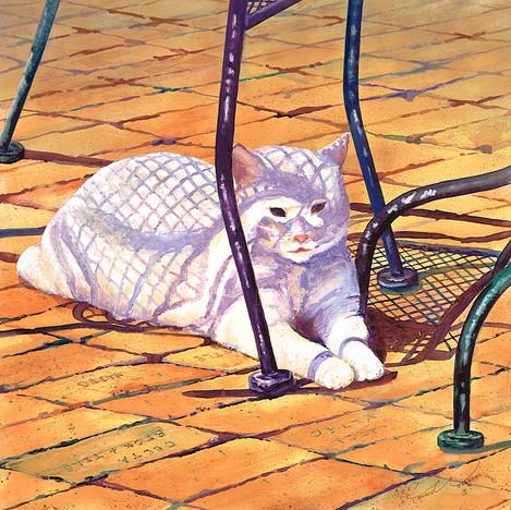 White Cat On Patio