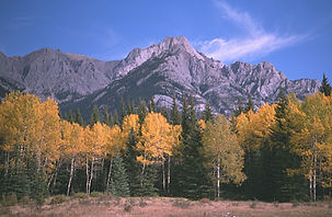 CFPN Colorado Landscape 2