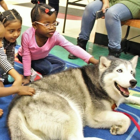 Animal therapy, kids and dogs, book reading, pre-k for all, pre-k for all new york