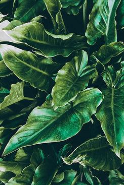green-leafed-plant-2215534.jpg
