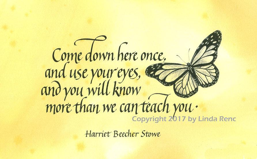 Stowe -Butterfly