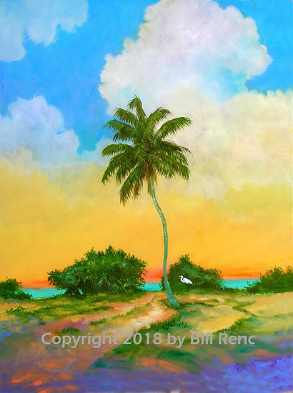 Coconut Palm Morning