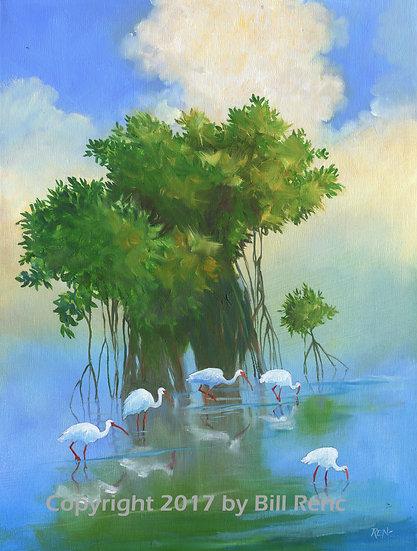 Five ibis