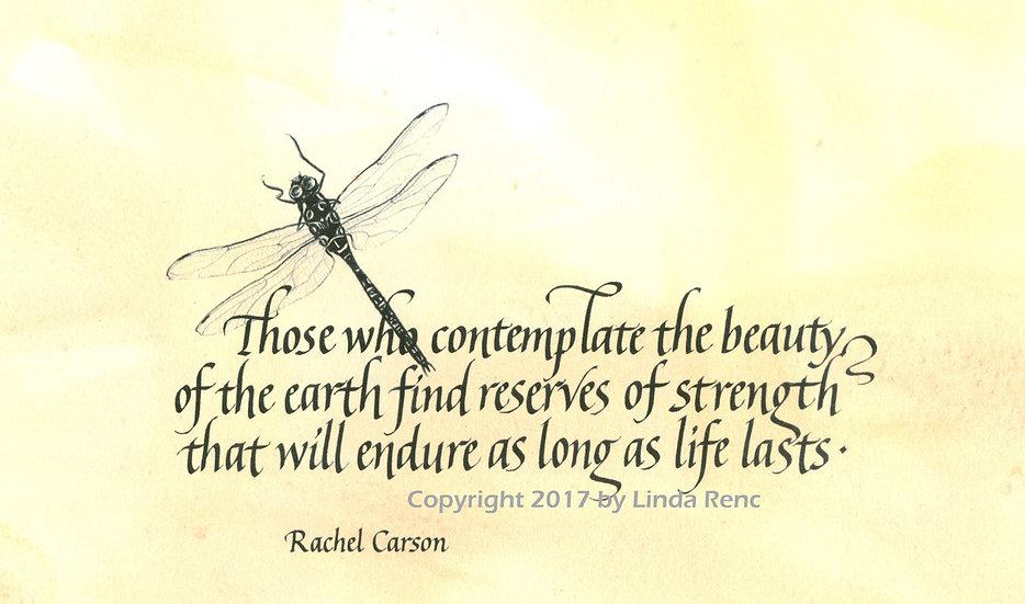 Carson - Dragonfly