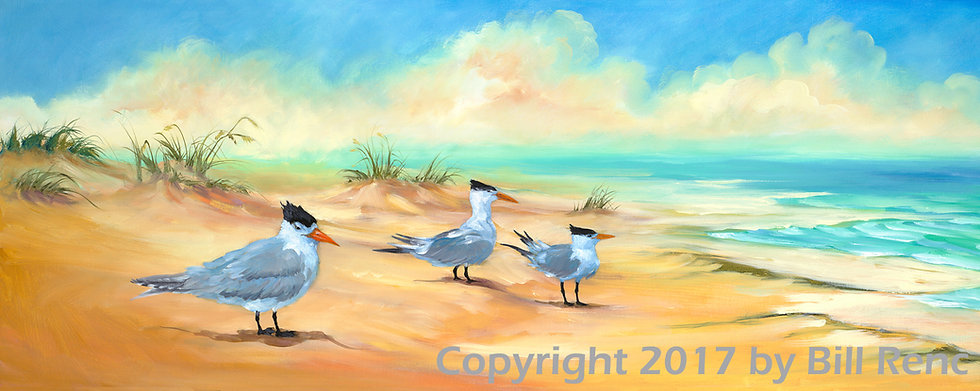 Royal Terns on Honeymoon Island