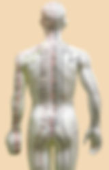 Wellbelifebalance,ウェルビーライフバランス,経絡,経絡リンパ, オイルトリートメント,リラリラクゼーション,サロン,中野,肩こり,腰痛,頭痛,慢性