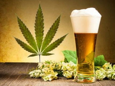 Beer and Marijuana what's the connection?