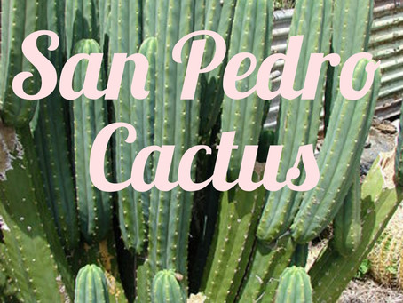 Experiencing San Pedro Cactus