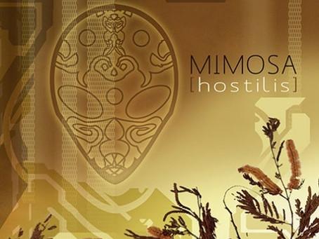 Mimosa Visions
