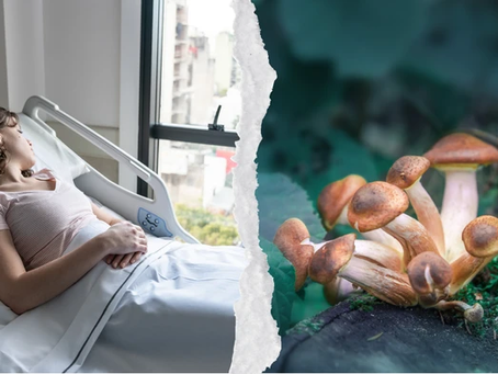 Scientists Want to Try Using Shrooms to Revive People in Vegetative States