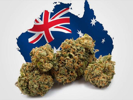 Australia and Cannabis Law & Rights