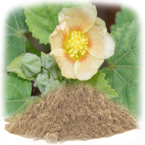 Indian Bala Powder 5gms Sida Cordifolia   Energy Relaxing