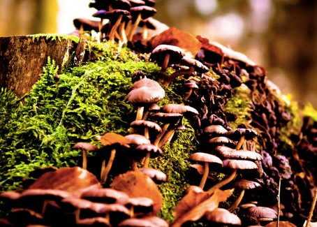 Scientists Reveal Why Magic Mushrooms Evolved Psychedelic Powers